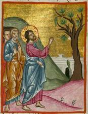 Проклятие смоковницы. Книжная миниатюра из арабского Евангелия XVII в.